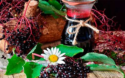 Maqui: súper fruto milenario chileno